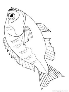 1000 images about mer on pinterest coloring pages mermaids and