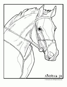 horses animal coloring pages and horse head on pinterest
