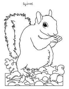 squirrel coloring pages for kids and coloring pages on pinterest