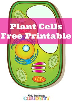 plant cell coloring and plants on pinterest