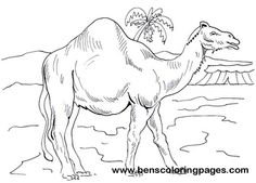 coloring pages camel and coloring on pinterest