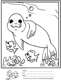 seals underwater and coloring pages on pinterest