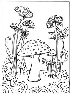 1000 Images About Magic Mushrooms On Pinterest