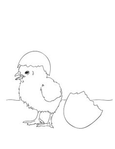 baby chicks coloring pages and coloring sheets on pinterest