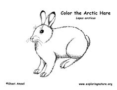 animal coloring pages coloring pages and coloring on pinterest