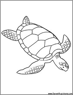 turtles sea turtles and coloring pages on pinterest