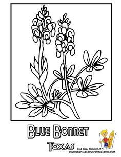flower coloring pages coloring pages and coloring on pinterest