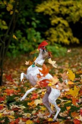 leaves, dogs who are crazy about fall