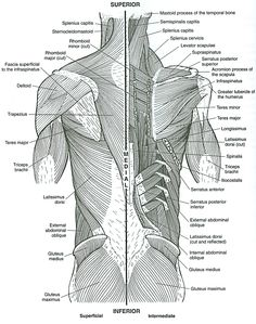 musculoskeletal anatomy coloring book 2nd ed http kmelot