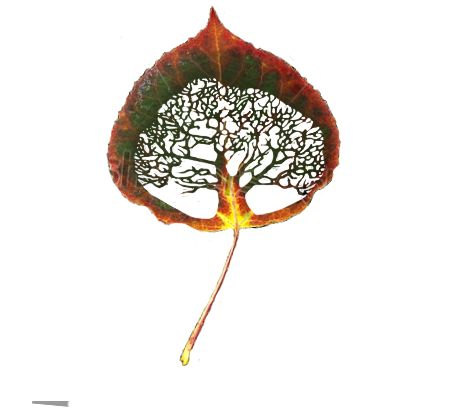 leaf tattoo | Tumblr  I love this!