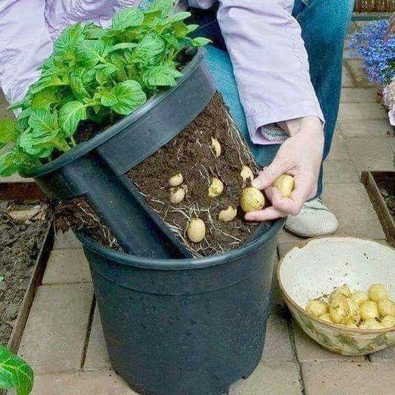 patatesli sebze