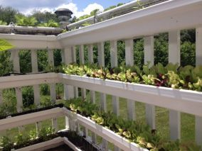 Another view of my gutter balcony garden w auto drip irrigation system.