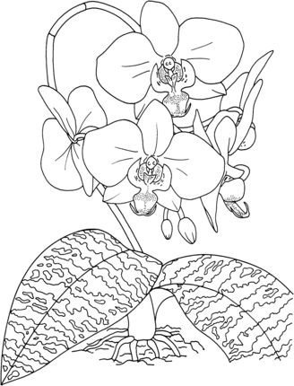 silk moth coloring page wasps coloring page free printable