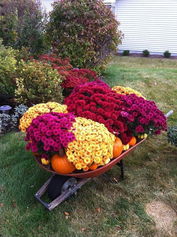 Wheelbarrow full of mums, pumpkins, and gourds in front of