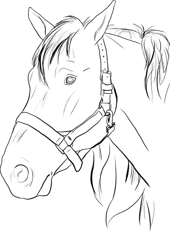 horse head coloring pages to print and coloring pages on pinterest