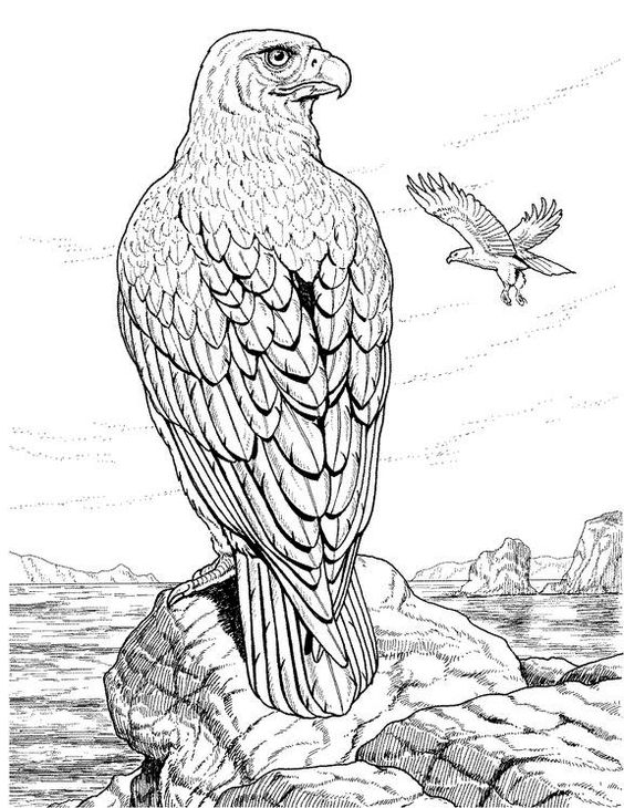 detailed coloring pages for adults coloring pages animals realistic