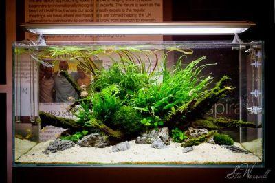 ISLAND SCAPE | aquarium | fish tank | aquascape ...