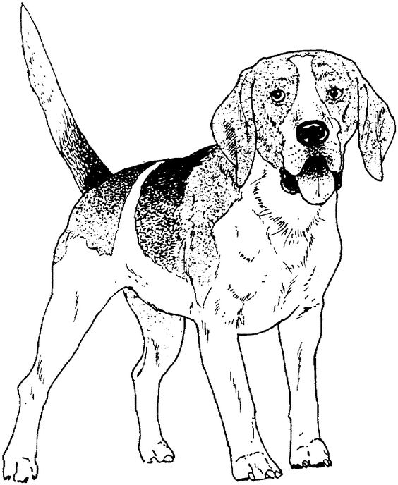 coloring pages dog breeds and drawings of dogs on pinterest