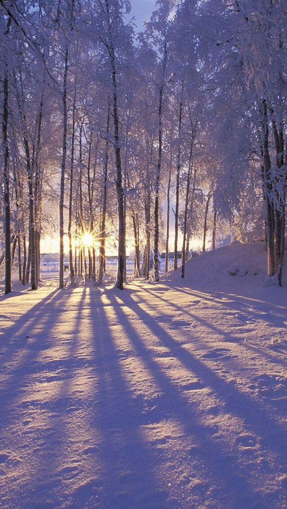 Snow, snow, snow.: