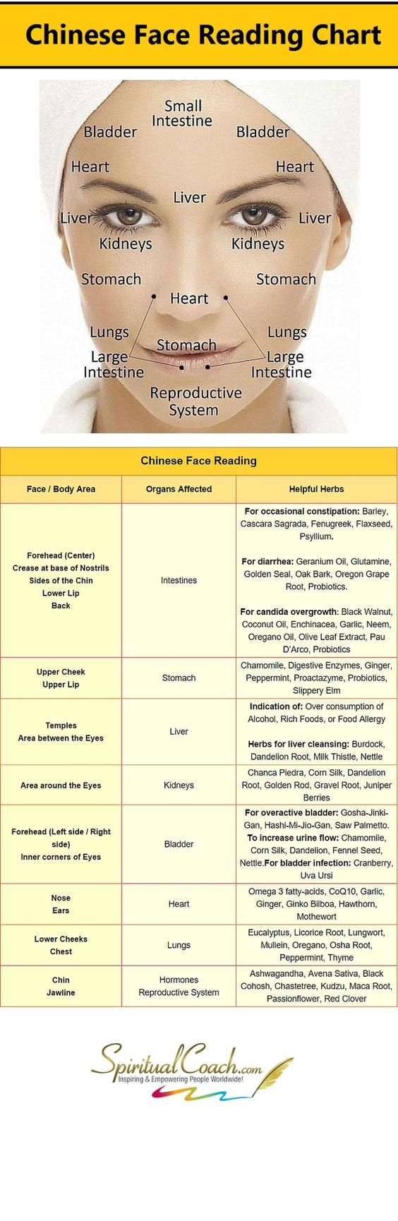 Chinese Facial Reading Chart - Learn what's going on inside your body by reading your face: www.spiritualcoac... #tcm #chinesemedicine #facereading Skin Care products - http://amzn.to/2iSUZHs: