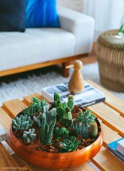 Seja em um vaso grandão no canto da sala ou em uma composição com vários cactos pequenos na mesa de centro, a espécie é sem dúvidas uma boa alternativa.: