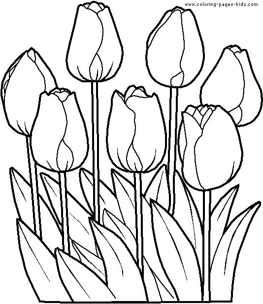 flower coloring pages coloring sheets and printable coloring