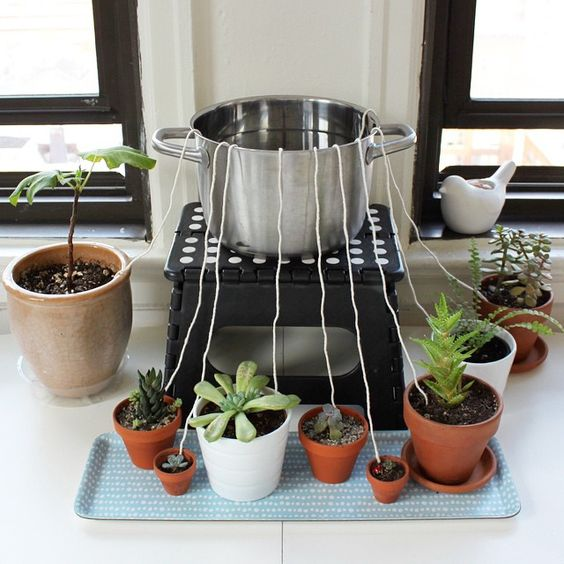 Don't let your houseplants suffer while you're away from home. Rig up this DIY self-watering wicking system.: