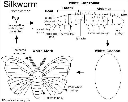 activities butterflies and worms on pinterest