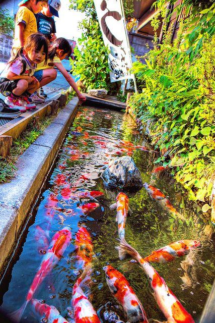 Koi, Koi ponds and Ponds on Pinterest