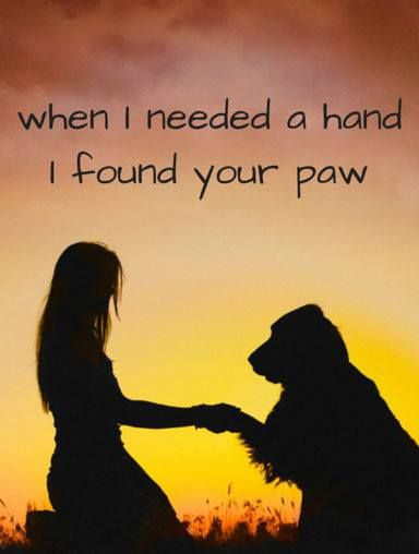 Dog paw - The best hand #dogs #quotes #dogquotes http://www.petrashop.com/: