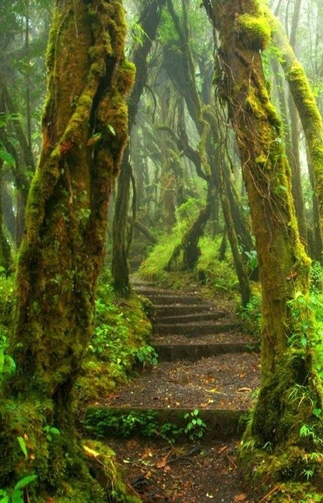 Hoh Rain Forest Trail at Olympic National Park in Washington State.: