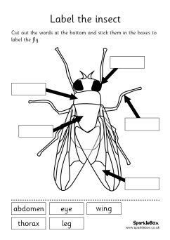 Insect Labeling Sheets And Words Is Worked Great For