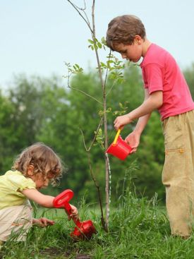 Planter un arbre: