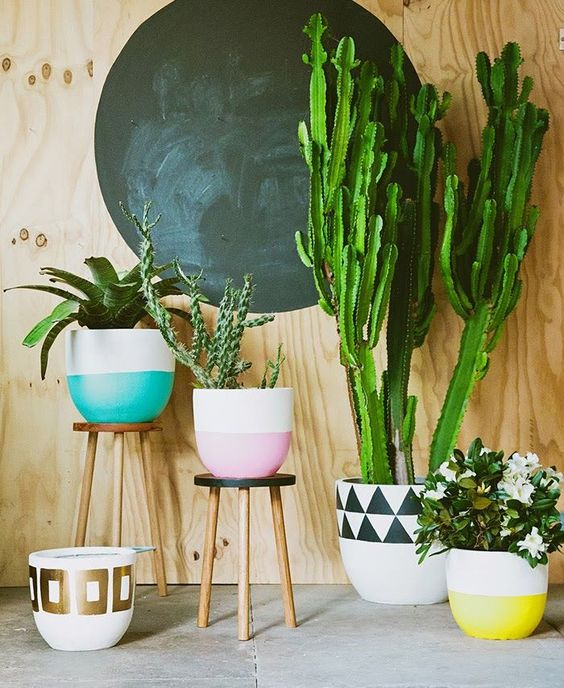 Se joga na decoração com plantas: