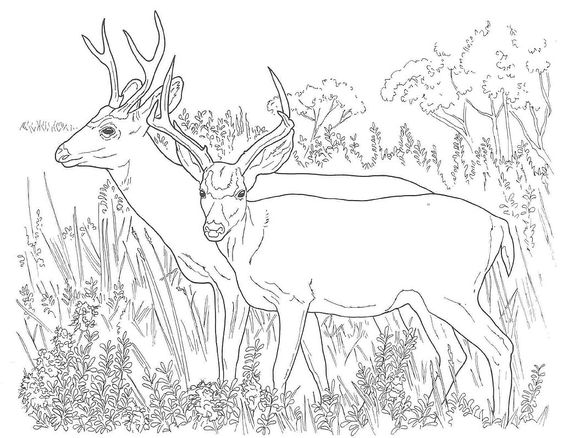 free printable coloring pages coloring pages and printable
