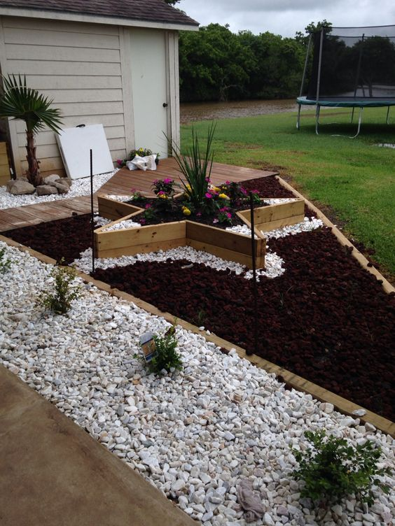 Star flower, Flower beds and Rock and on Pinterest