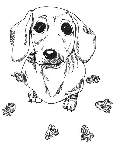 dachshund printable coloring pages doxie heaven pinterest