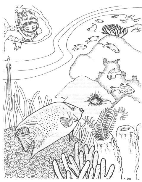 tropical fish coloring pages and coloring on pinterest