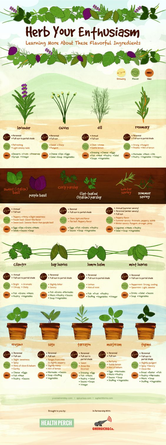 Pinterest Infographics: Herb Your Enthusiasm