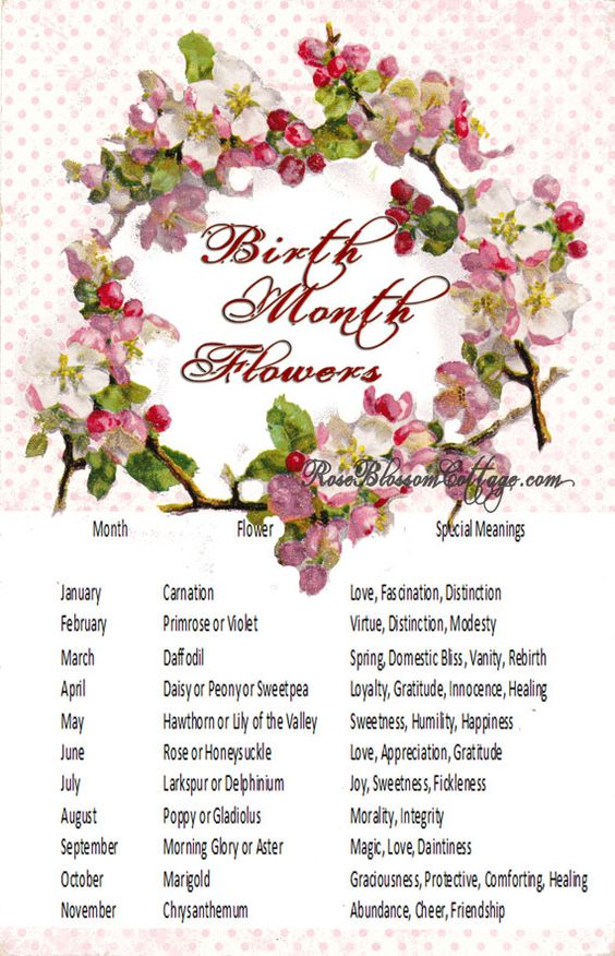 Birth Flowers and Meanings Sweet Ideas! Pinterest