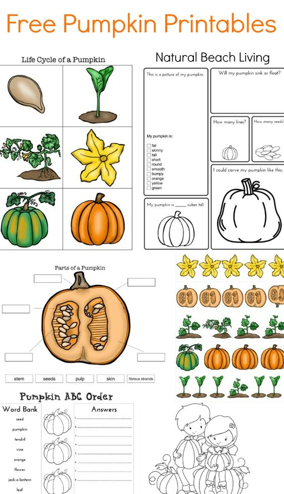 The Best Pumpkin Activities for Kids (STEM Coloring