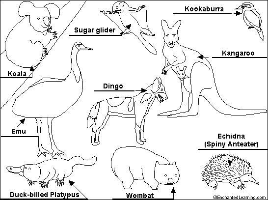 australian animals anzac day and australia day on pinterest