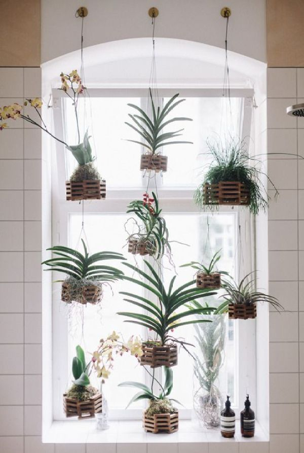 A lovely alternative idea for displaying plants - hang them in a window!: