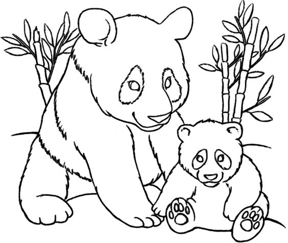coloring pages pandas and coloring on pinterest