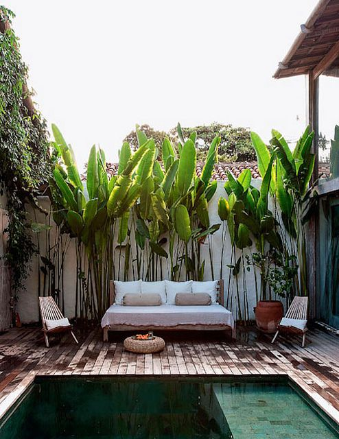 casita mia. sillon y palms..: