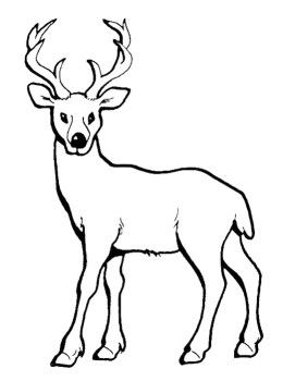 coloring pages deer and baby deer on pinterest