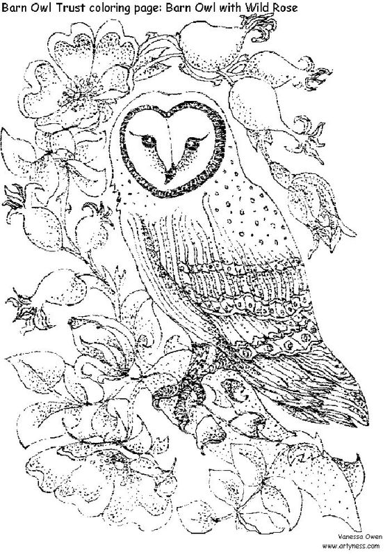 colouring pages owl facts and coloring pages for adults on pinterest