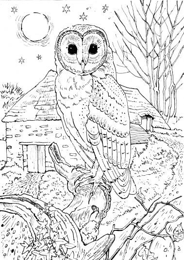 coloring pages coloring pages for adults and coloring on pinterest