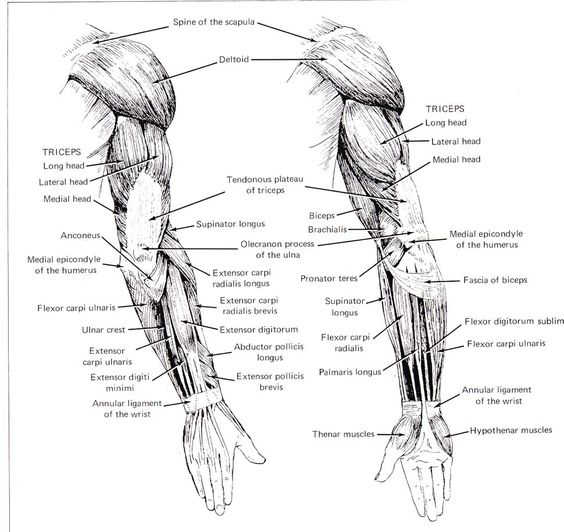 explore or male and more anatomy