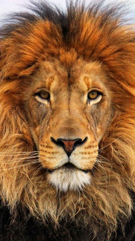 10 Amazing Lion Sculptures Made From Surprising Stuff